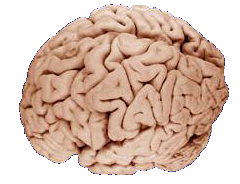 Brain-food essen mit hirn